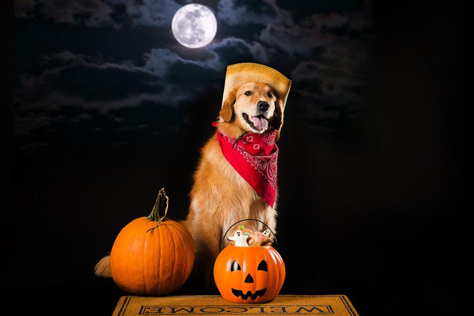 dog-treats_puppy