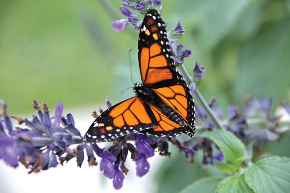 Digest_Main-Monarch