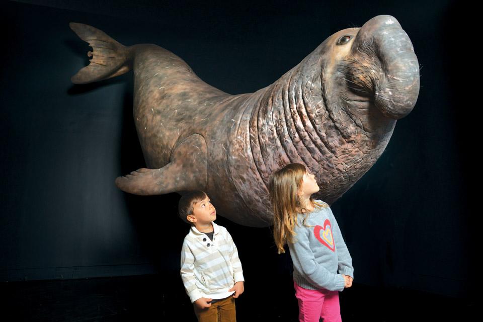 CMNH_Elephant-seal-model_DF