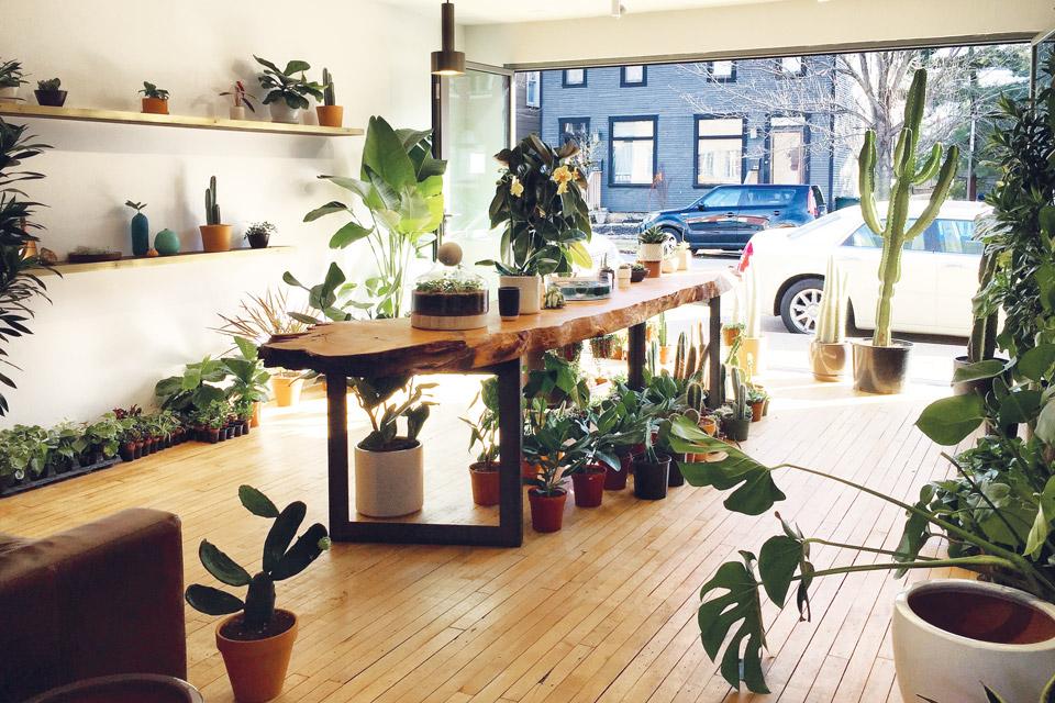 Stump-plant-shop
