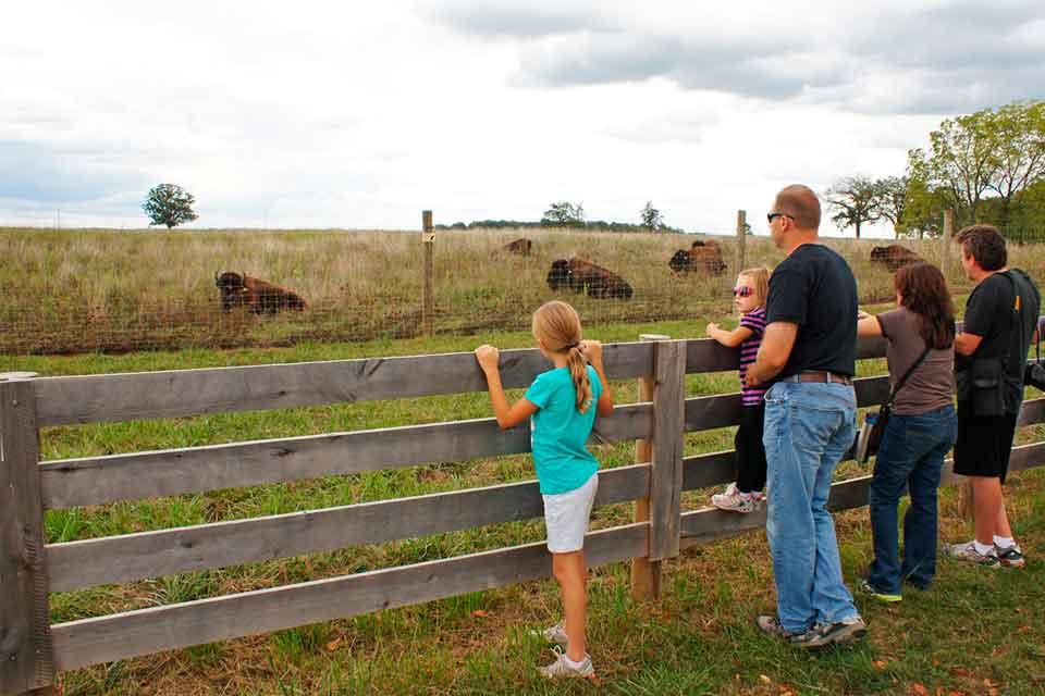 Bison Hike at Battele Darby Creek Metro Park