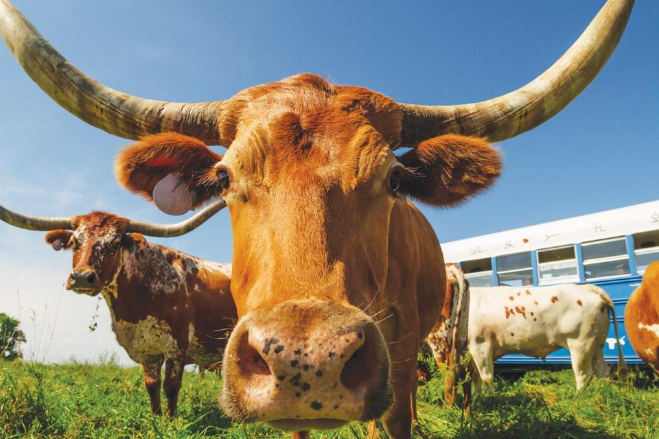 Roadside-Dickinson-Cattle-Company