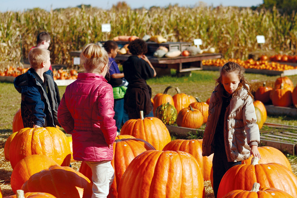 Large-pumpkins-at-Fleitz