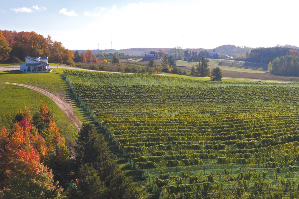 Rove-Estate-vineyards
