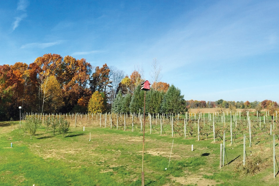 Sandhill Crane Vineyards in the Fall