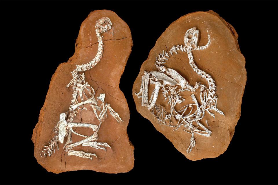 Khaan-fossils